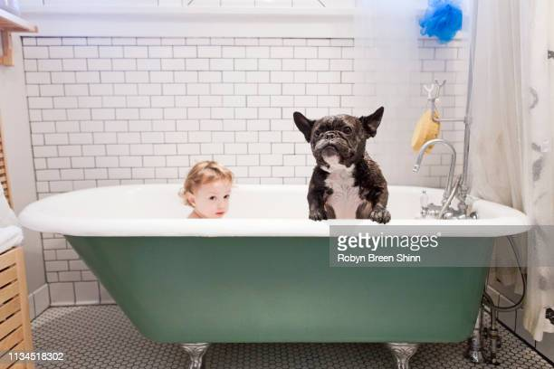 girl sitting with bulldog in bathtub - taking a bath stock pictures, royalty-free photos & images