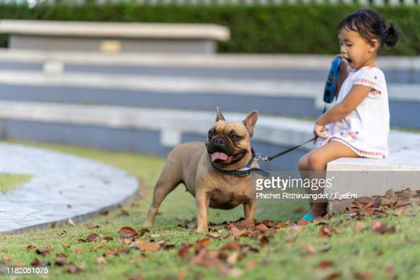 girl sitting with dog at park - phichet ritthiruangdet stock photos and pictures