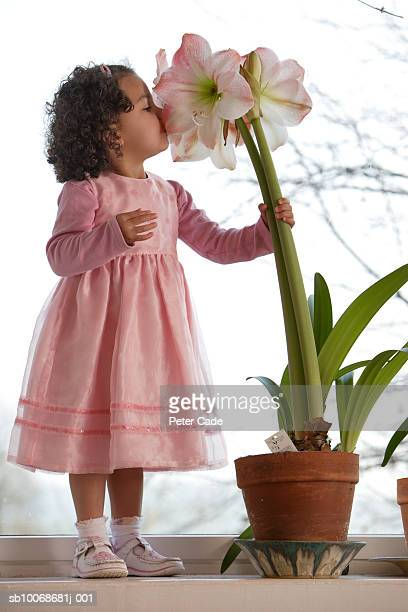 Girl (2-3) smelling Amaryllis Belladonna flower