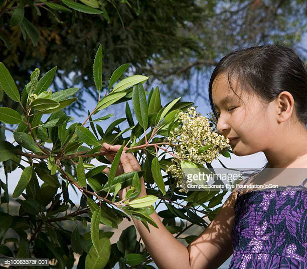 "girl (10-11 years) smelling flowers from tree branch, side view - ""compassionate eye"" stock-fotos und bilder"
