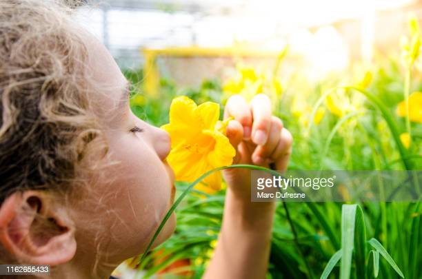 girl smelling yellow hemerocallis - sensory perception stock pictures, royalty-free photos & images
