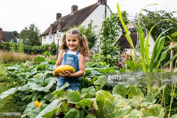 girl standing in a vegetable patch in a garden, holding yellow gourd, smiling at camera. - vegetable stock pictures, royalty-free photos & images