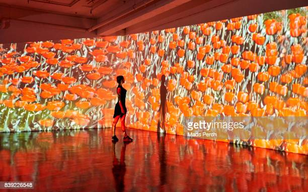 girl standing in front of large scale projected image of roses - abundance stock pictures, royalty-free photos & images