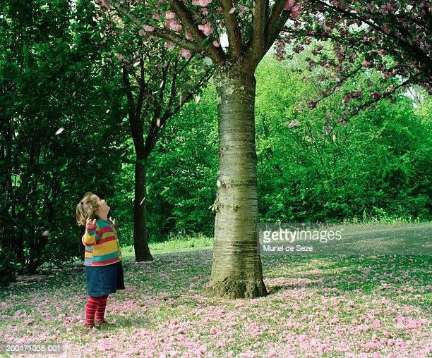 Girl (2-4) standing in garden looking up towards cherry tree