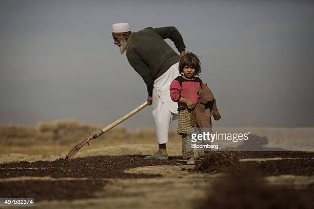 A girl stands as a farmer rakes drying raisins in a field near the Deh Sabz district of Kabul Province Afghanistan on Saturday Nov 1 2015 Although...