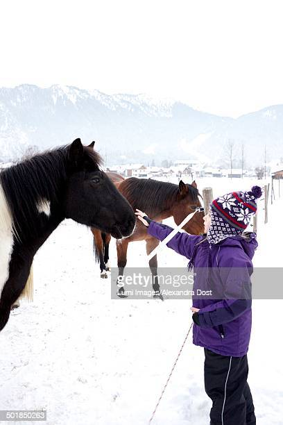 Girl stroking a horse in winter scenery, Oberammergau, Bavaria, Germany