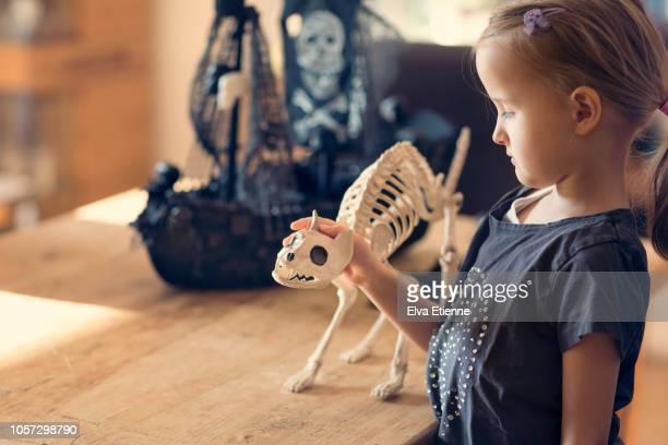 girl (6-7) stroking fake cat skeleton figure on a table - cat skeleton stock photos and pictures