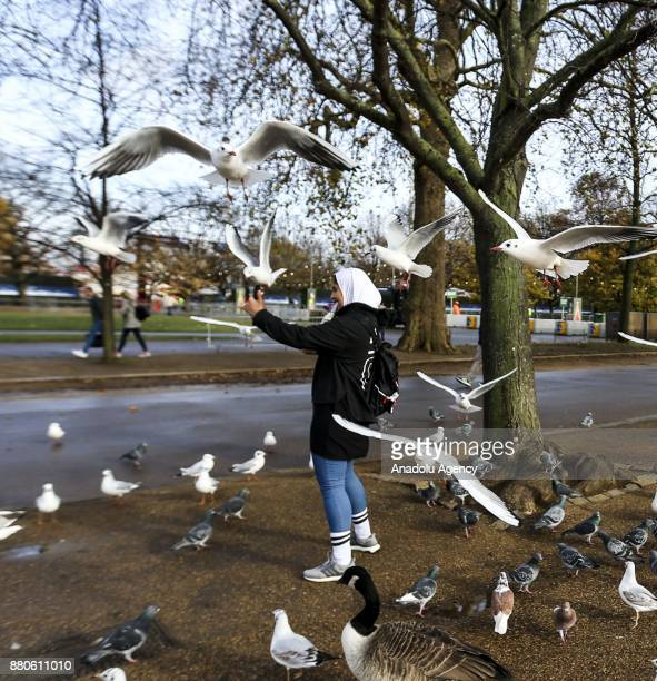 A girl takes a selfie with seagulls at Hyde Park during the last days of autumn on October 28 2017 in London England