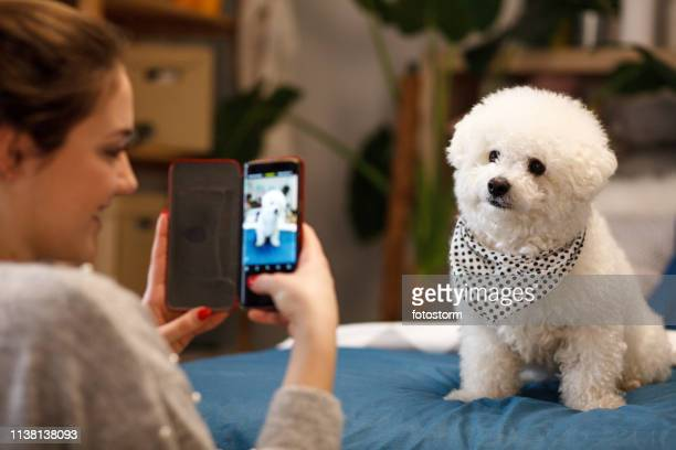 girl taking photo of her dog with smartphone - photography stock pictures, royalty-free photos & images