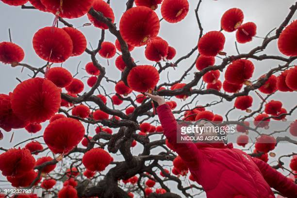 TOPSHOT A girl touches a lantern attached to a tree to celebrate the Lunar New Year marking the Year of the Dog at the Ditan park in Beijing on...