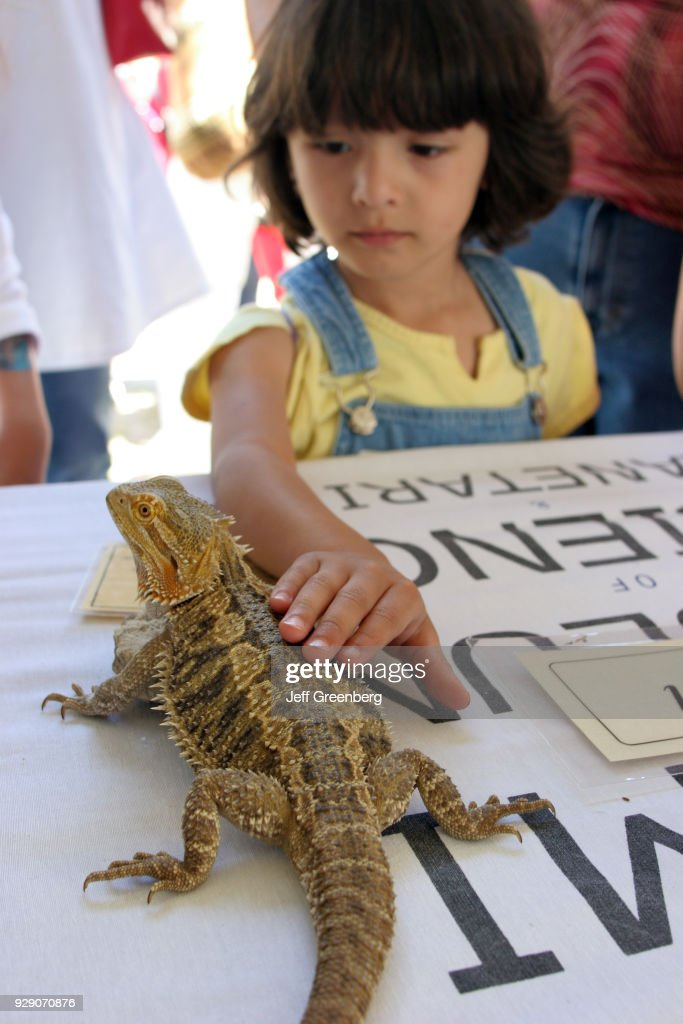 A girl touching a bearded dragon lizard on Miami River Day