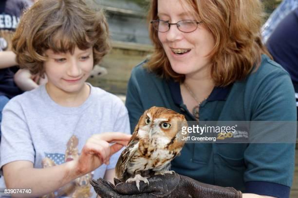 A girl touching a screech owl at Mill Mountain Zoo