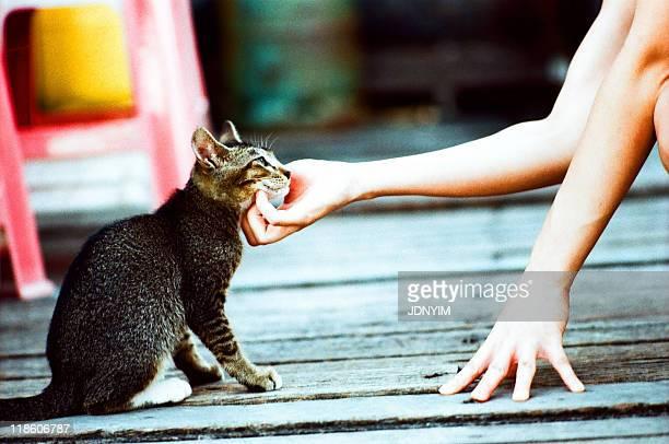 Girl touching cat