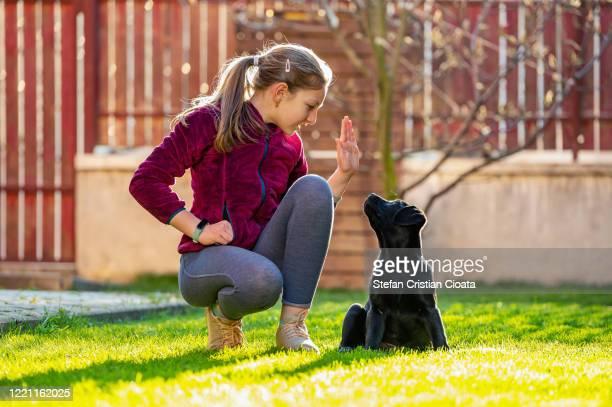 girl training her black labrador puppy in backyard - cristian neri foto e immagini stock