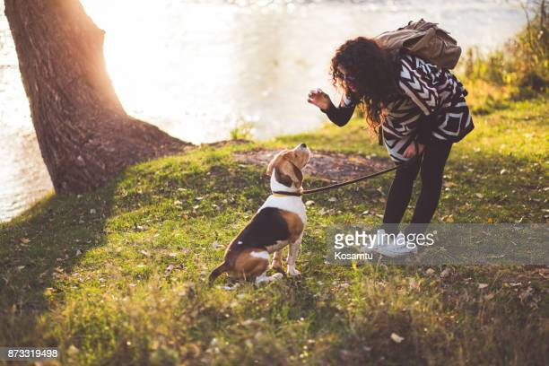 girl training her obedient beagle dog - riverbank stock photos and pictures
