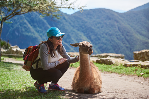 Girl traveller with lama 937110860