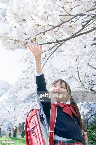 A Girl Trying to Reach Cherry Blossoms