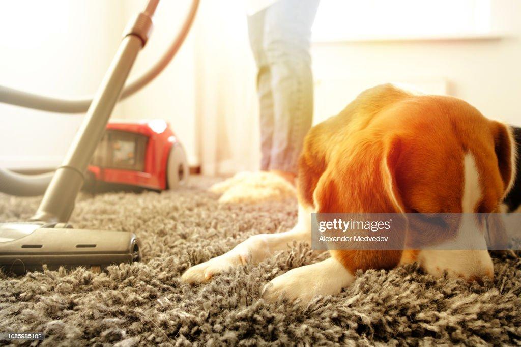 Mädchen mit einem Hund Staubsaugen : Stock-Foto