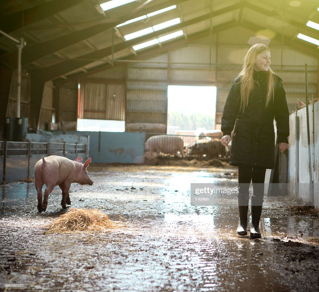Girl visiting organic pig farm. : Stock Photo
