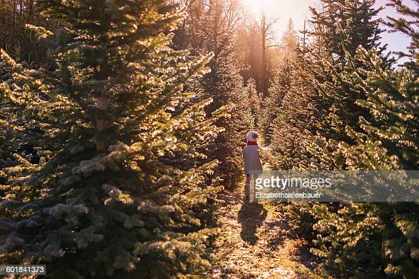 Girl walking between two rows of trees