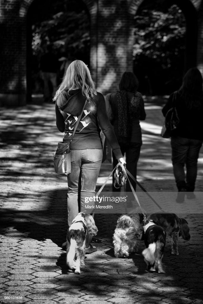 Girl walking her dogs in Central Park : Stock-Foto