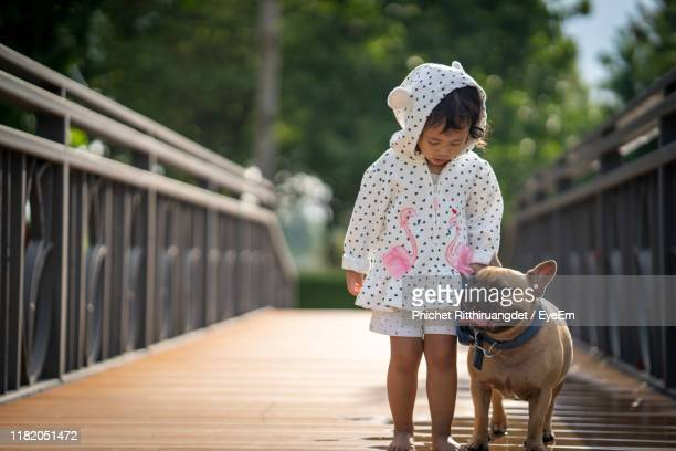 girl walking with dog on footbridge - phichet ritthiruangdet stock photos and pictures