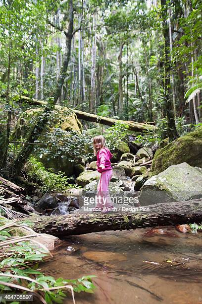 A Girl Walks Across A Fallen Tree Over Water In Mount Warning National Forest