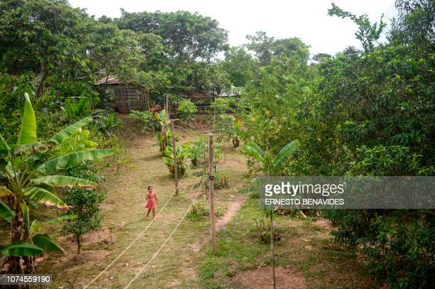 A girl walks at El Paraiso farm in Maynas Loreto region in the northern Peruvian Amazon rainforest on November 24 2018 In the heart of the Peruvian...