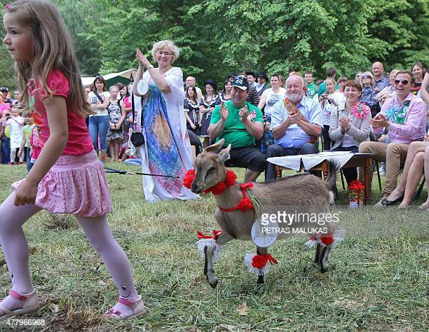A girl walks goat Grazuole past competition judges during a goat beauty contest in Ramygala Lithuania on July 20 2015 Ramygala was called the capital...