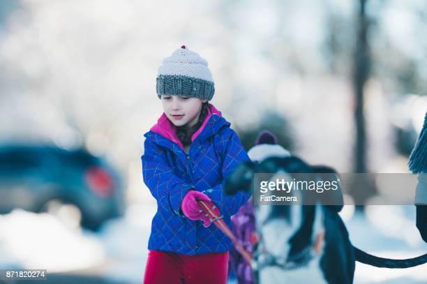 Girl walks great dane dog in snow