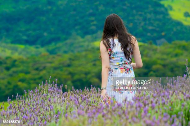 girl walks in lavender field - claudio capucho stock photos and pictures