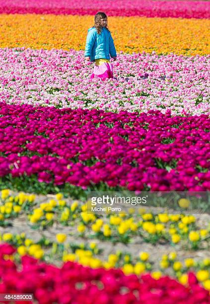 A girl walks in the flower fields on April 13 2014 in Noordwijkerhout Netherlands The fields are in bloom early this year due to the very mild winter...