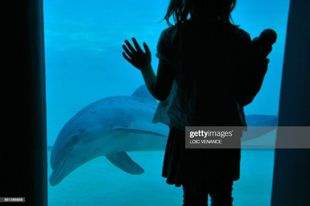 FRANCE-DOLPHINS-PARK-DOLPHINARIUM : News Photo