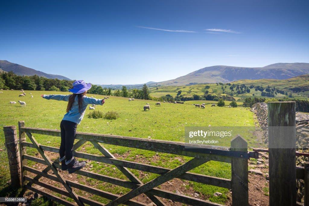 Girl watching sheep in countryside near Keswick, England : Stock Photo