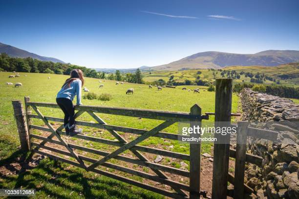 girl watching sheep in countryside near keswick, england - scena rurale foto e immagini stock