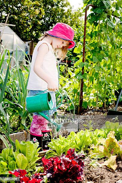 girl watering lettuces - vegetable garden stock pictures, royalty-free photos & images
