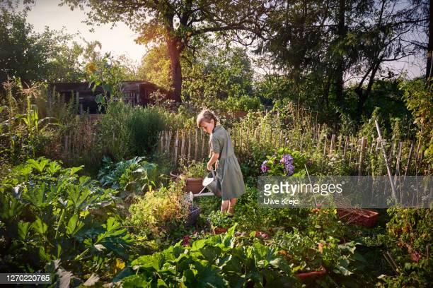 girl watering vegetable garden - idyllic stock-fotos und bilder