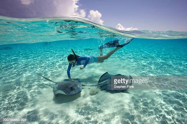 girl (11-13) wearing snorkle gear, touching southern stingray - dasiatide foto e immagini stock