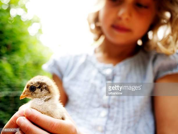 Fille avec une poule chick