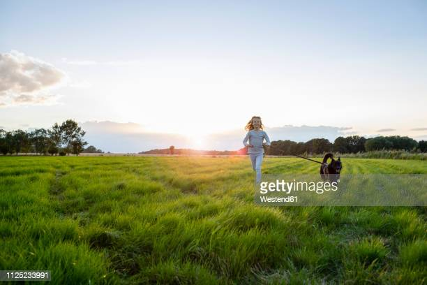girl with a dog running over a field at sunset - rushing the field stock pictures, royalty-free photos & images