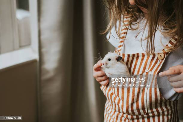girl with a hamster in her pocket - pets stock pictures, royalty-free photos & images