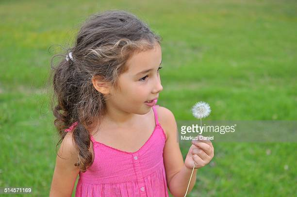 "girl with dandelion - ""markus daniel"" stock pictures, royalty-free photos & images"