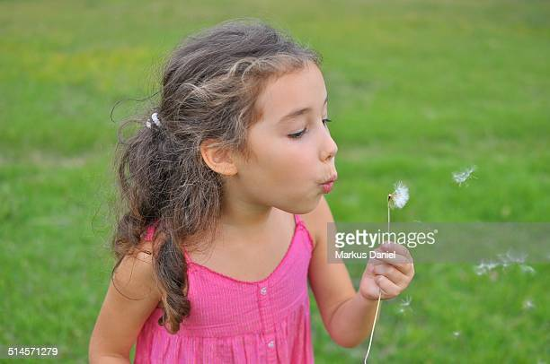 """girl with dandelion - """"markus daniel"""" stock pictures, royalty-free photos & images"""
