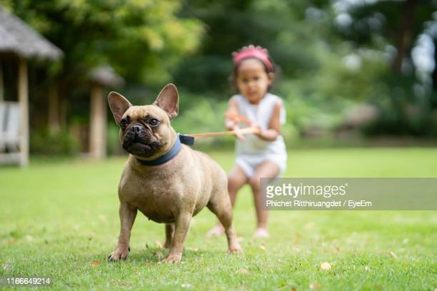 girl with dog in yard - phichet ritthiruangdet stock photos and pictures