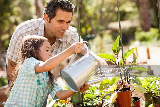 Girl with father using watering can in community garden