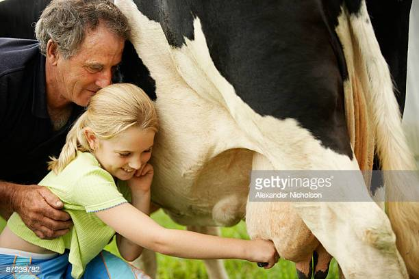 girl with grandfather milking cow