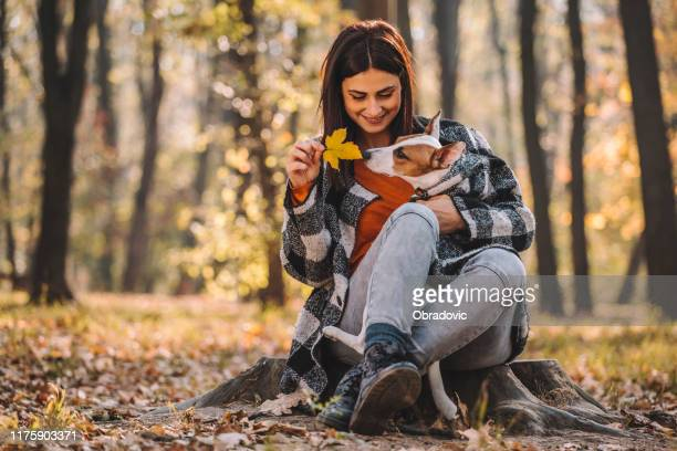 girl with her dog in the autumn park stock photo - jack russell terrier imagens e fotografias de stock