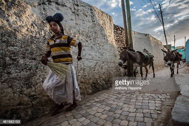 CONTENT] girl with his donkeys in the streets of harar ethiopia