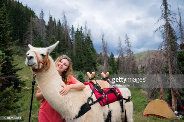 fille avec des lamas dans les montagnes rocheuses - lama photos et images de collection