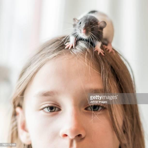 girl with pet rat on her head - gedomesticeerde dieren stockfoto's en -beelden